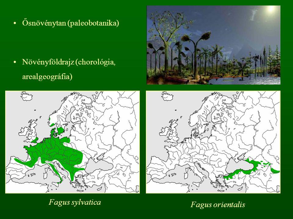 Ősnövénytan (paleobotanika)