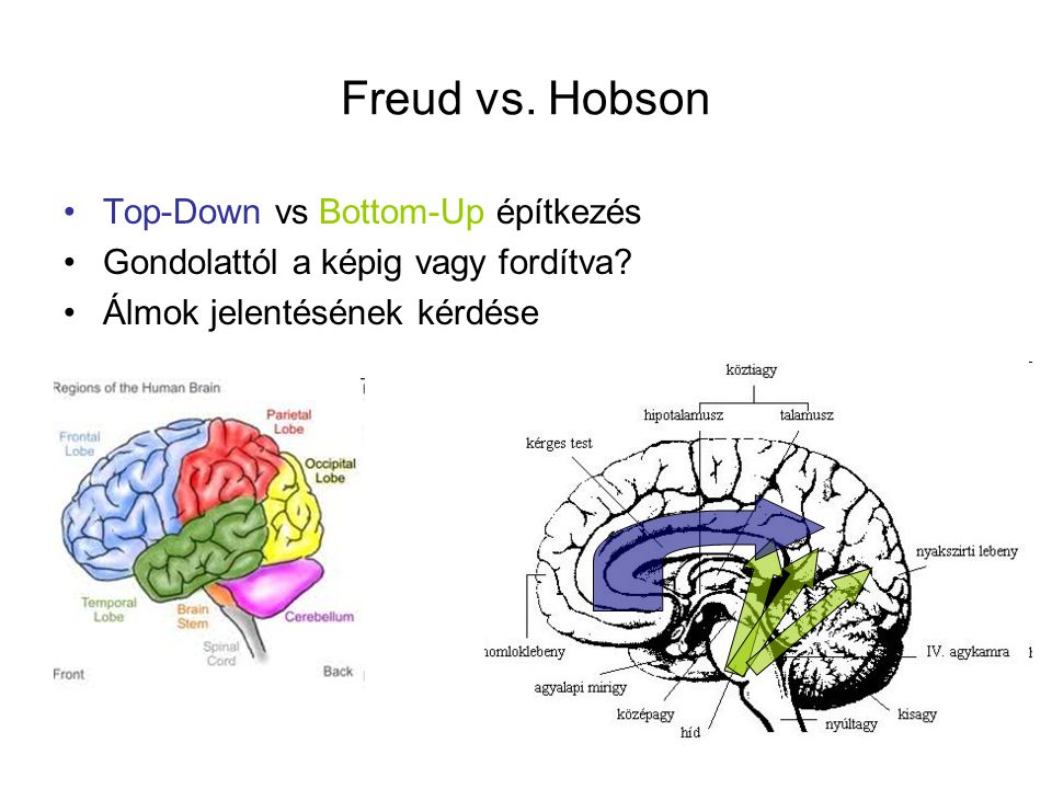 Freud vs. Hobson Top-Down vs Bottom-Up építkezés