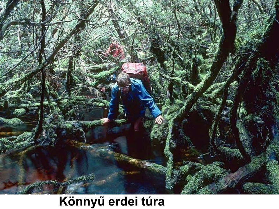 Könnyű erdei túra