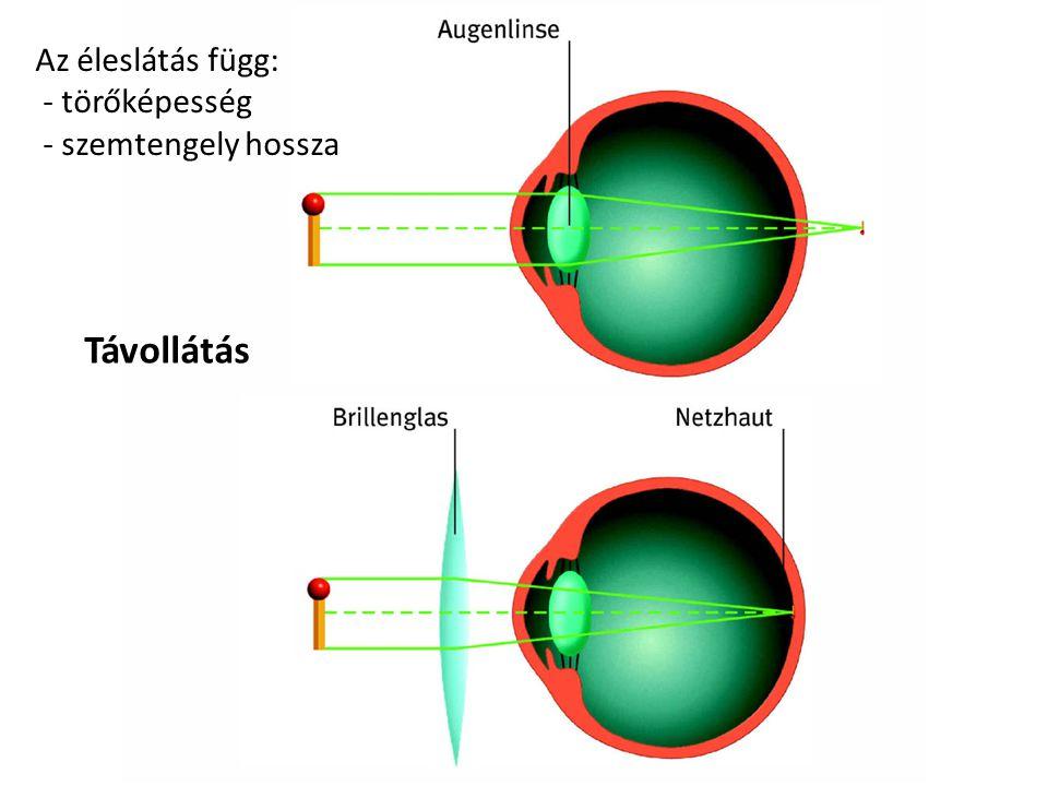 Az éleslátás függ: - törőképesség - szemtengely hossza