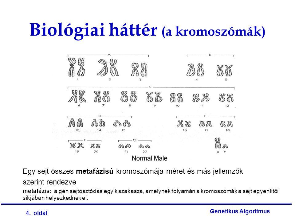 Biológiai háttér (a kromoszómák)