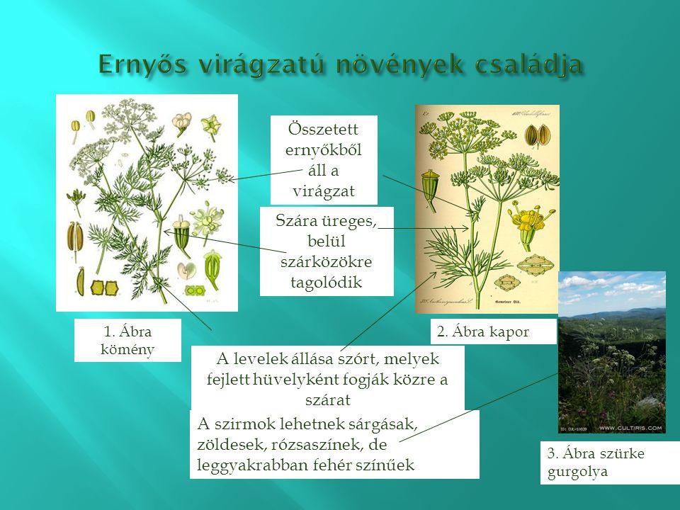 Ernyős virágzatú növények családja