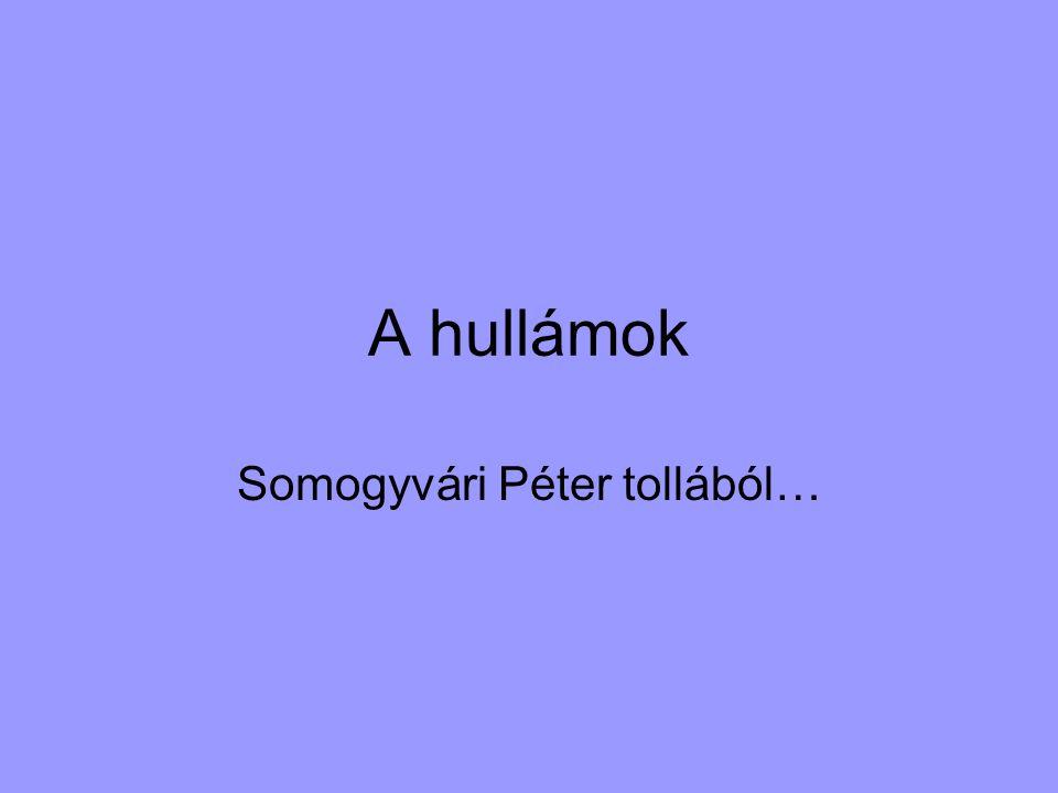 Somogyvári Péter tollából…