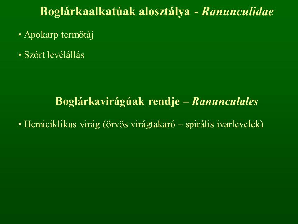 Boglárkaalkatúak alosztálya - Ranunculidae