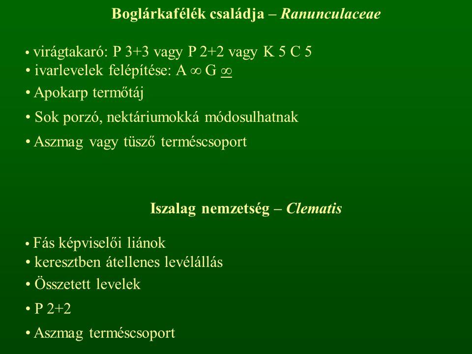 Boglárkafélék családja – Ranunculaceae Iszalag nemzetség – Clematis