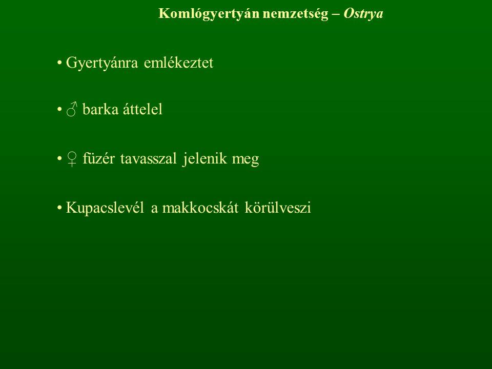 Komlógyertyán nemzetség – Ostrya