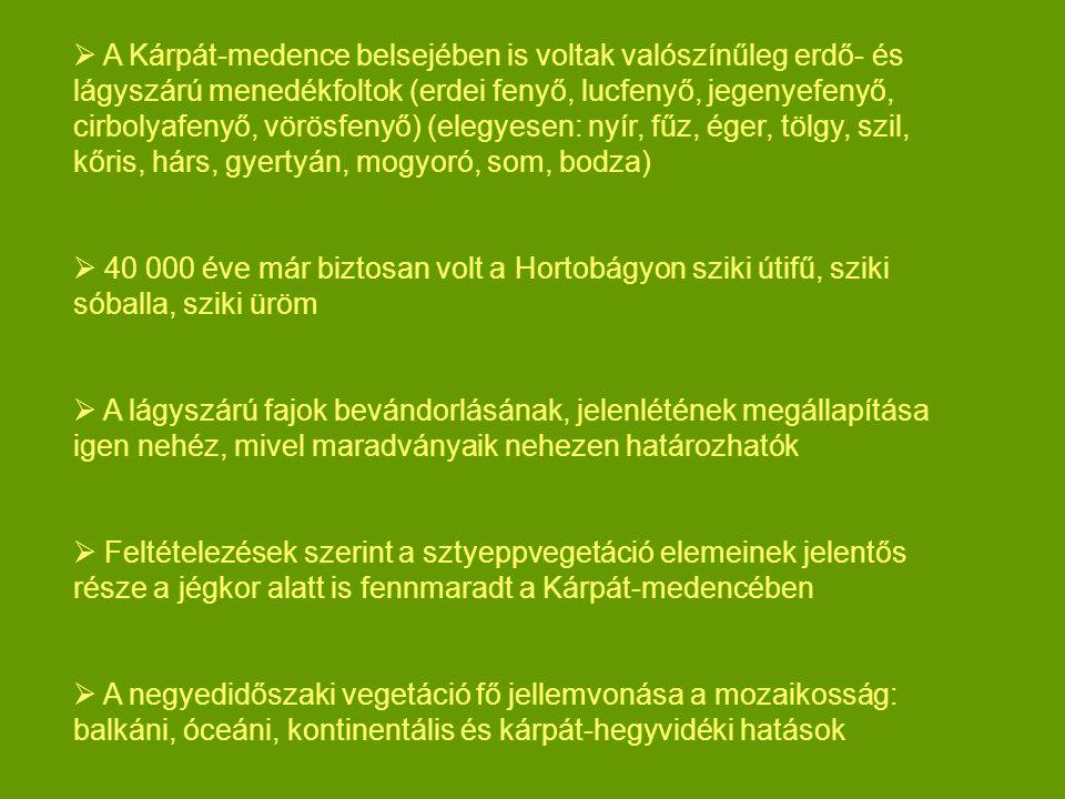 A Kárpát-medence belsejében is voltak valószínűleg erdő- és lágyszárú menedékfoltok (erdei fenyő, lucfenyő, jegenyefenyő, cirbolyafenyő, vörösfenyő) (elegyesen: nyír, fűz, éger, tölgy, szil, kőris, hárs, gyertyán, mogyoró, som, bodza)