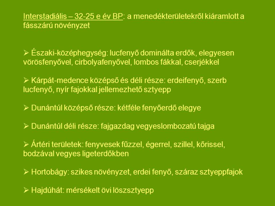 Interstadiális – 32-25 e év BP: a menedékterületekről kiáramlott a fásszárú növényzet