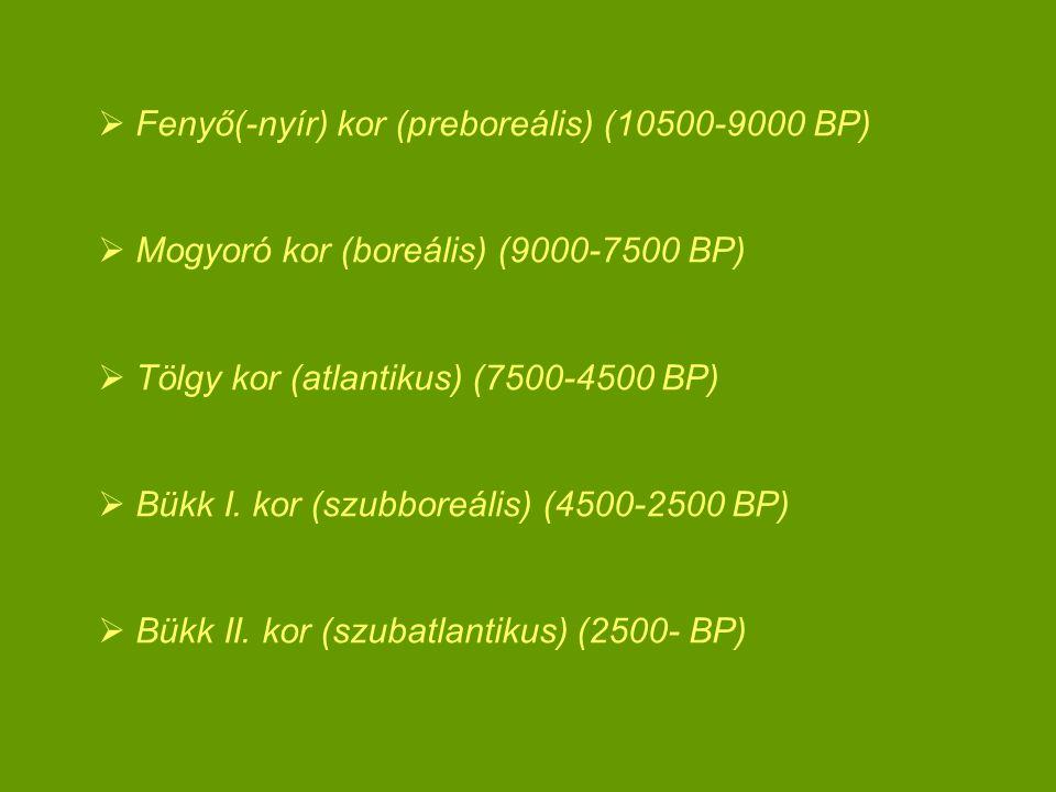 Fenyő(-nyír) kor (preboreális) (10500-9000 BP)