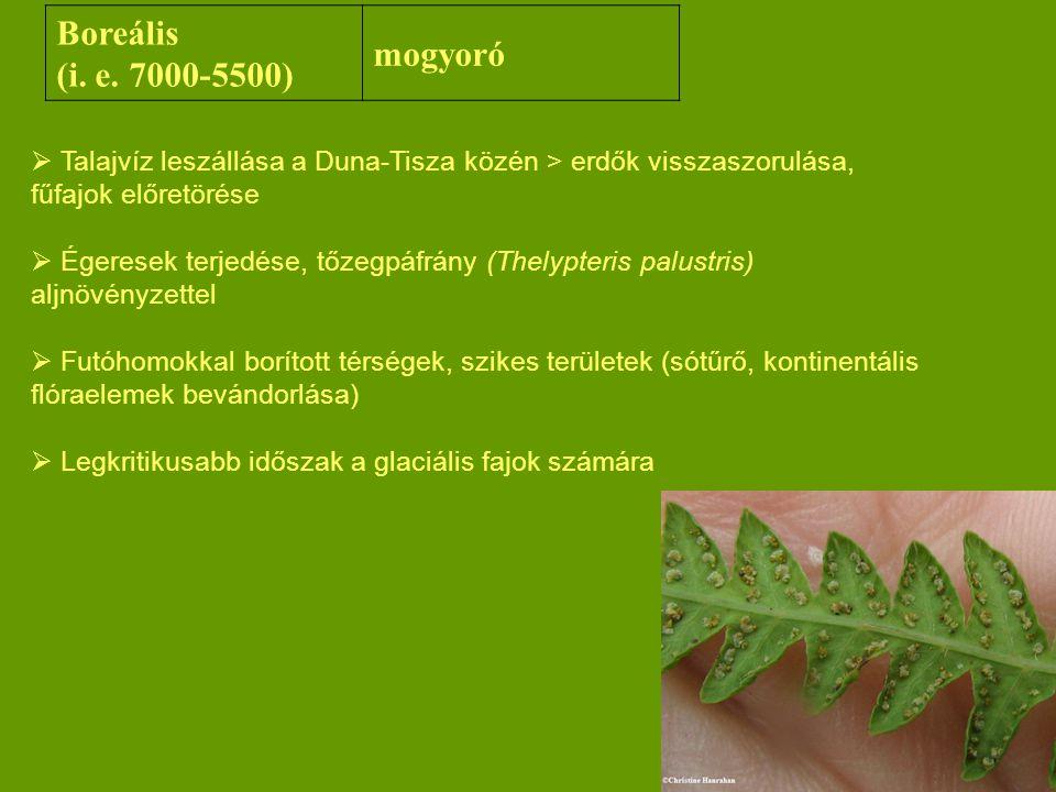 Boreális mogyoró (i. e. 7000-5500)