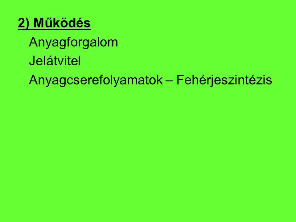 2) Működés Anyagforgalom Jelátvitel Anyagcserefolyamatok – Fehérjeszintézis
