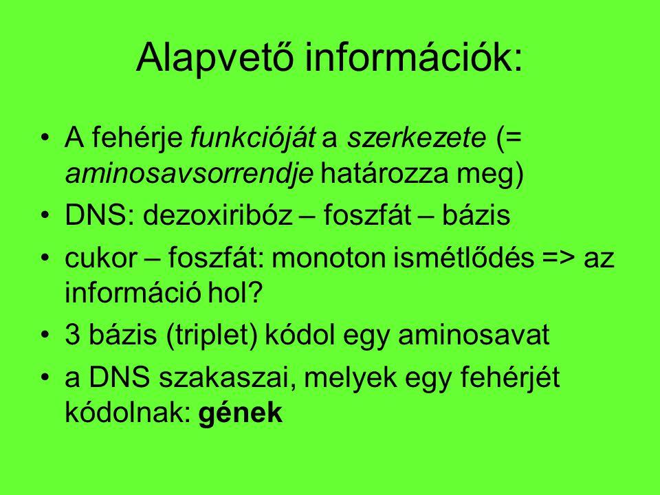 Alapvető információk: