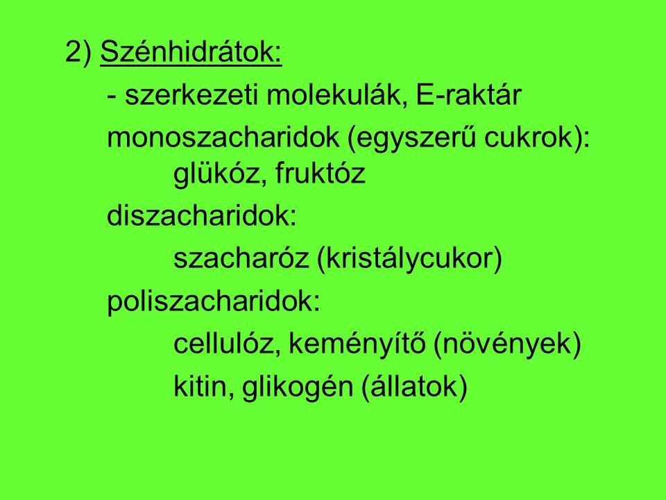 2) Szénhidrátok: - szerkezeti molekulák, E-raktár. monoszacharidok (egyszerű cukrok): glükóz, fruktóz.
