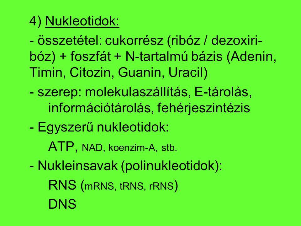 4) Nukleotidok: - összetétel: cukorrész (ribóz / dezoxiri-bóz) + foszfát + N-tartalmú bázis (Adenin, Timin, Citozin, Guanin, Uracil)