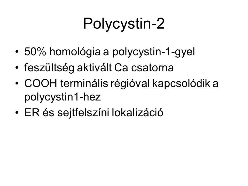 Polycystin-2 50% homológia a polycystin-1-gyel