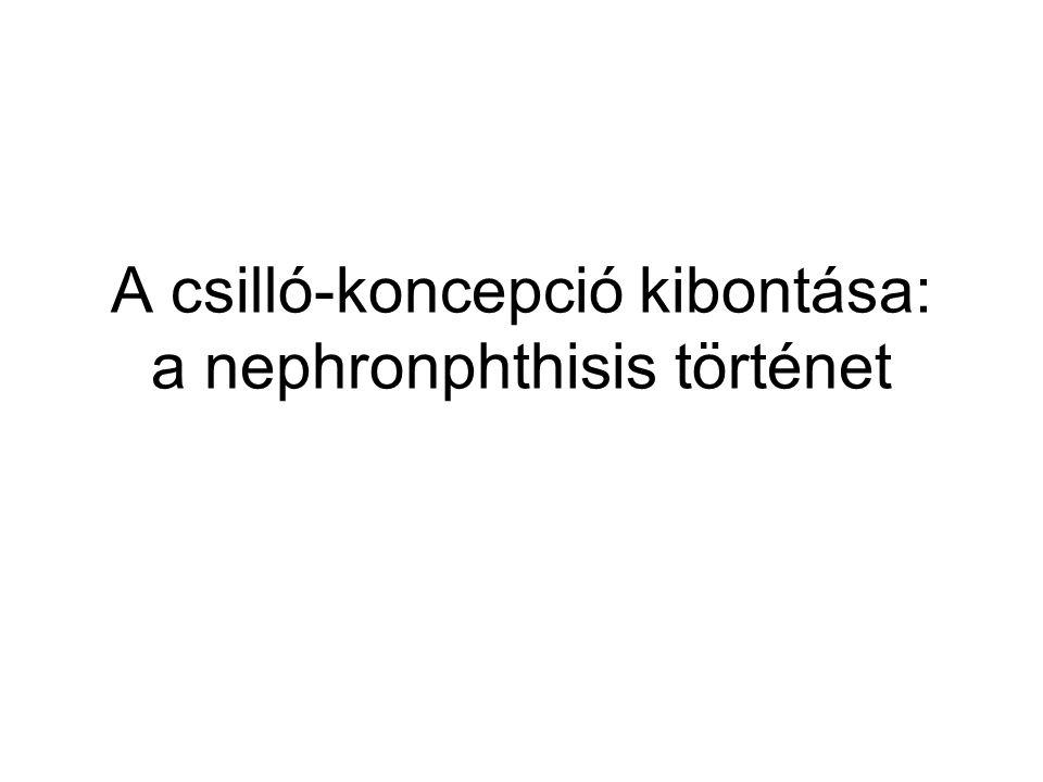 A csilló-koncepció kibontása: a nephronphthisis történet