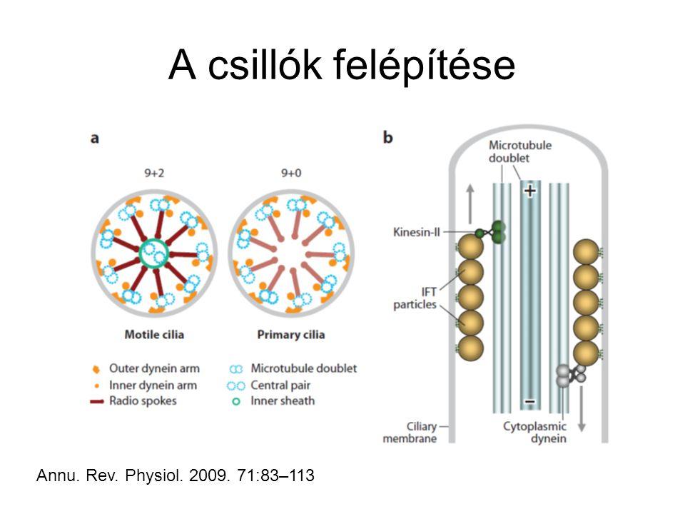 A csillók felépítése Annu. Rev. Physiol. 2009. 71:83–113