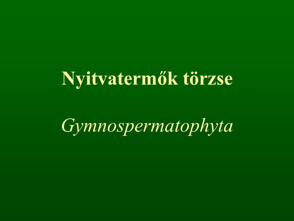 Nyitvatermők törzse Gymnospermatophyta