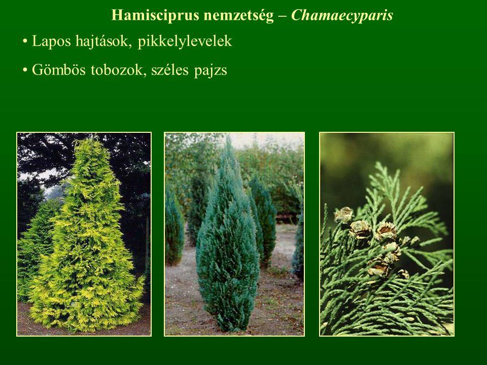 Hamisciprus nemzetség – Chamaecyparis