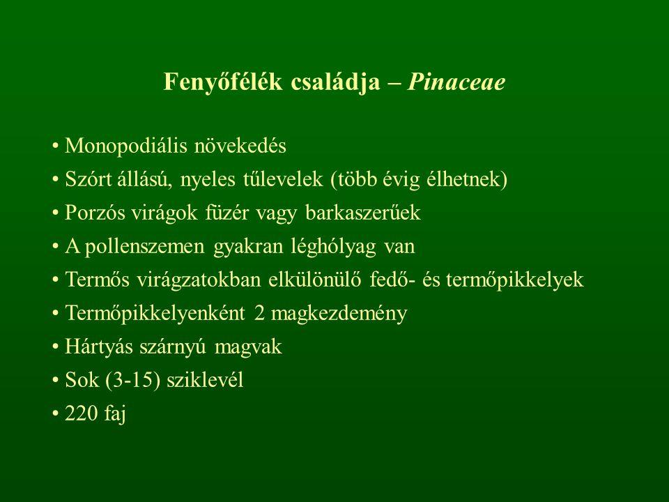 Fenyőfélék családja – Pinaceae