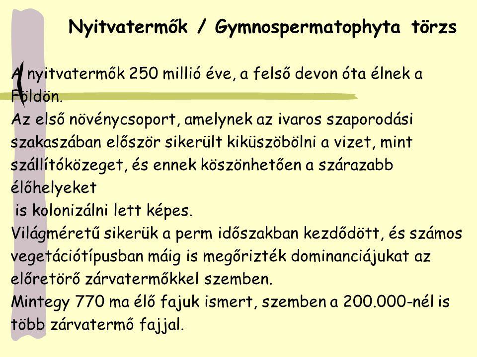 Nyitvatermők / Gymnospermatophyta törzs