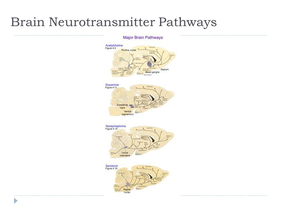 Brain Neurotransmitter Pathways