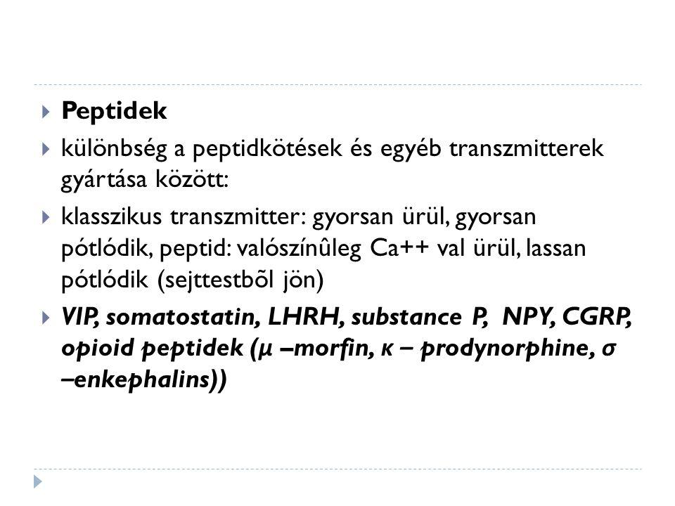 Peptidek különbség a peptidkötések és egyéb transzmitterek gyártása között: