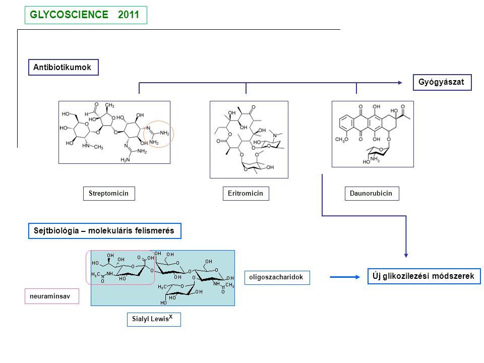 GLYCOSCIENCE 2011 Antibiotikumok Gyógyászat
