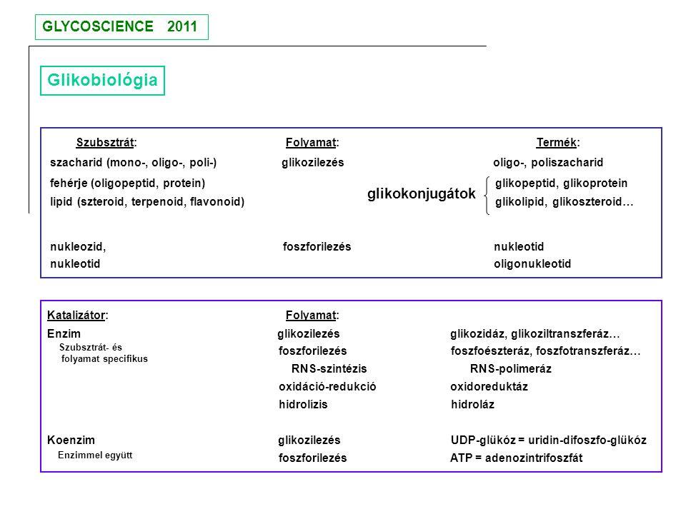 Glikobiológia GLYCOSCIENCE 2011 glikokonjugátok