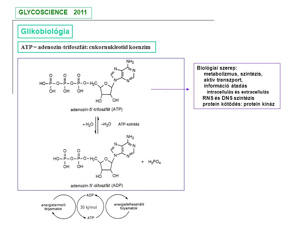 Glikobiológia GLYCOSCIENCE 2011
