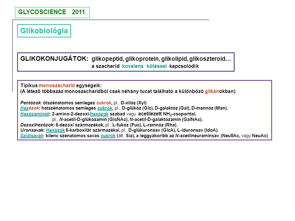 GLYCOSCIENCE 2011 Glikobiológia. GLIKOKONJUGÁTOK: glikopeptid, glikoprotein, glikolipid, glikoszteroid…