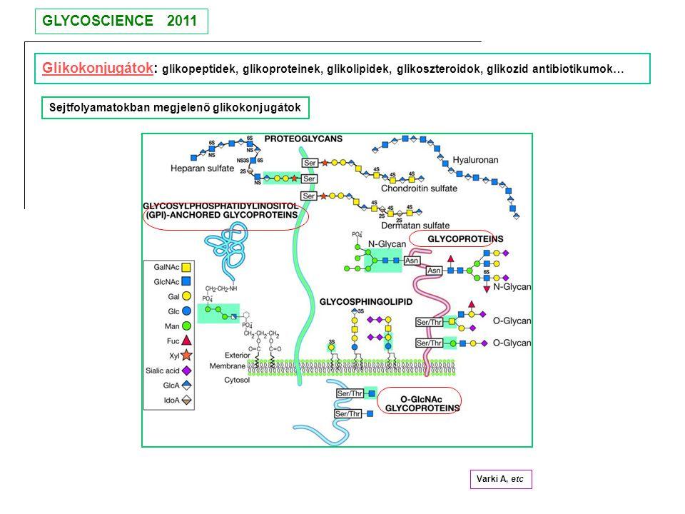 GLYCOSCIENCE 2011 Glikokonjugátok: glikopeptidek, glikoproteinek, glikolipidek, glikoszteroidok, glikozid antibiotikumok…