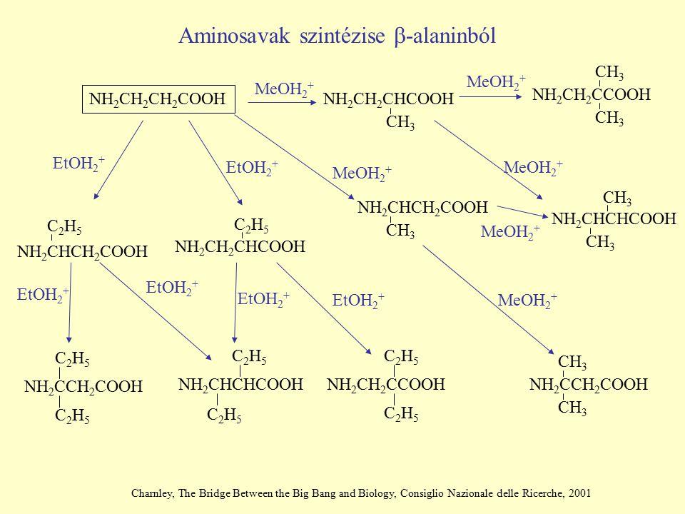 Aminosavak szintézise b-alaninból