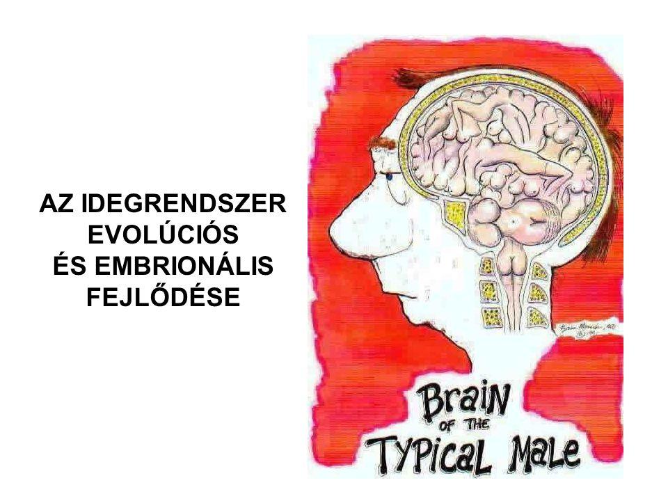 AZ IDEGRENDSZER EVOLÚCIÓS ÉS EMBRIONÁLIS FEJLŐDÉSE