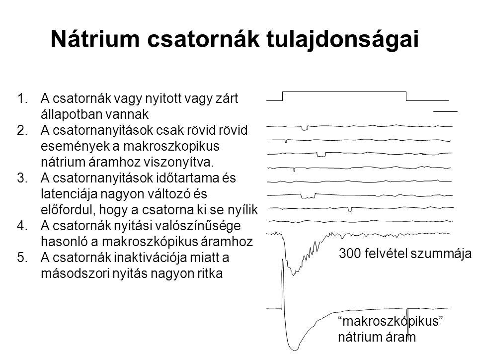 Nátrium csatornák tulajdonságai