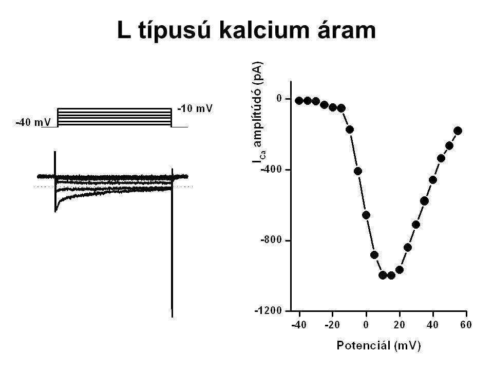 L típusú kalcium áram