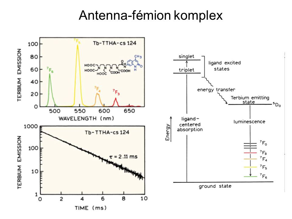 Antenna-fémion komplex