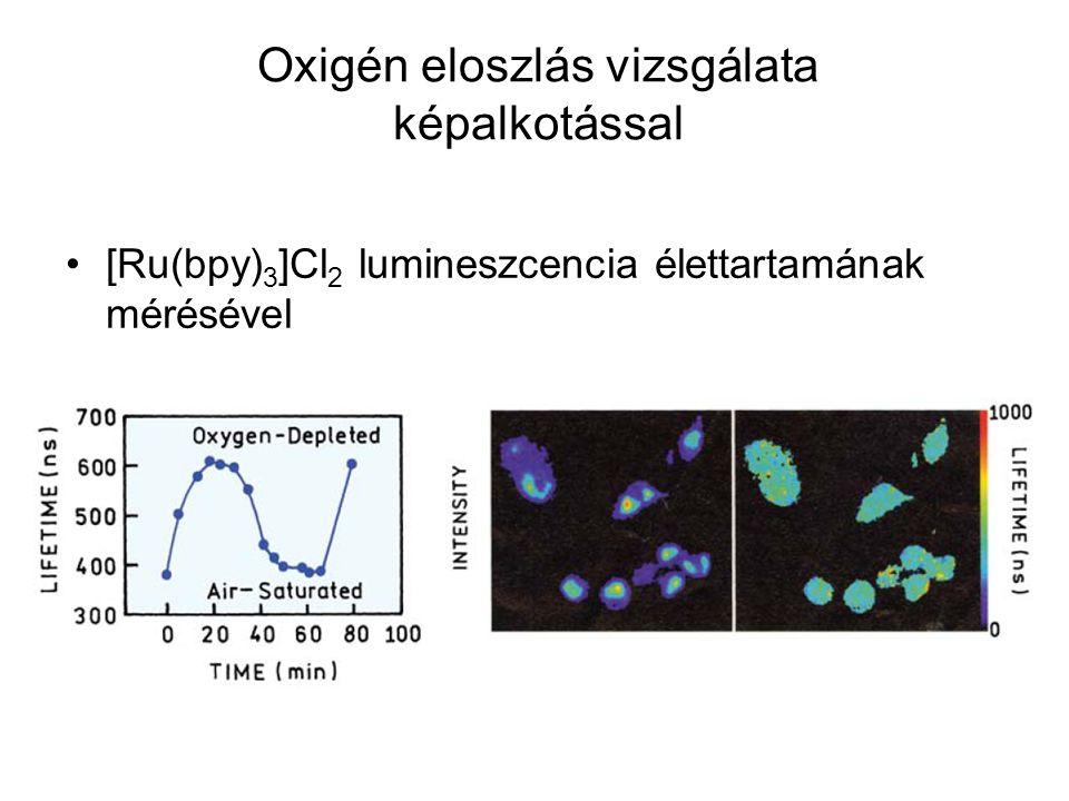 Oxigén eloszlás vizsgálata képalkotással