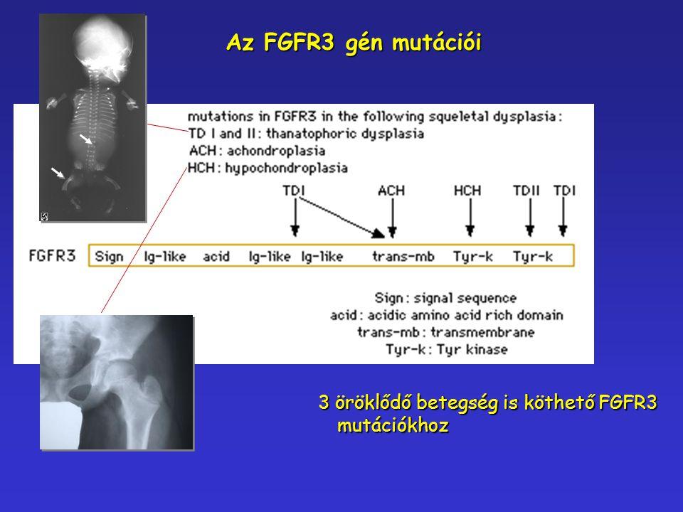 Az FGFR3 gén mutációi 3 öröklődő betegség is köthető FGFR3 mutációkhoz