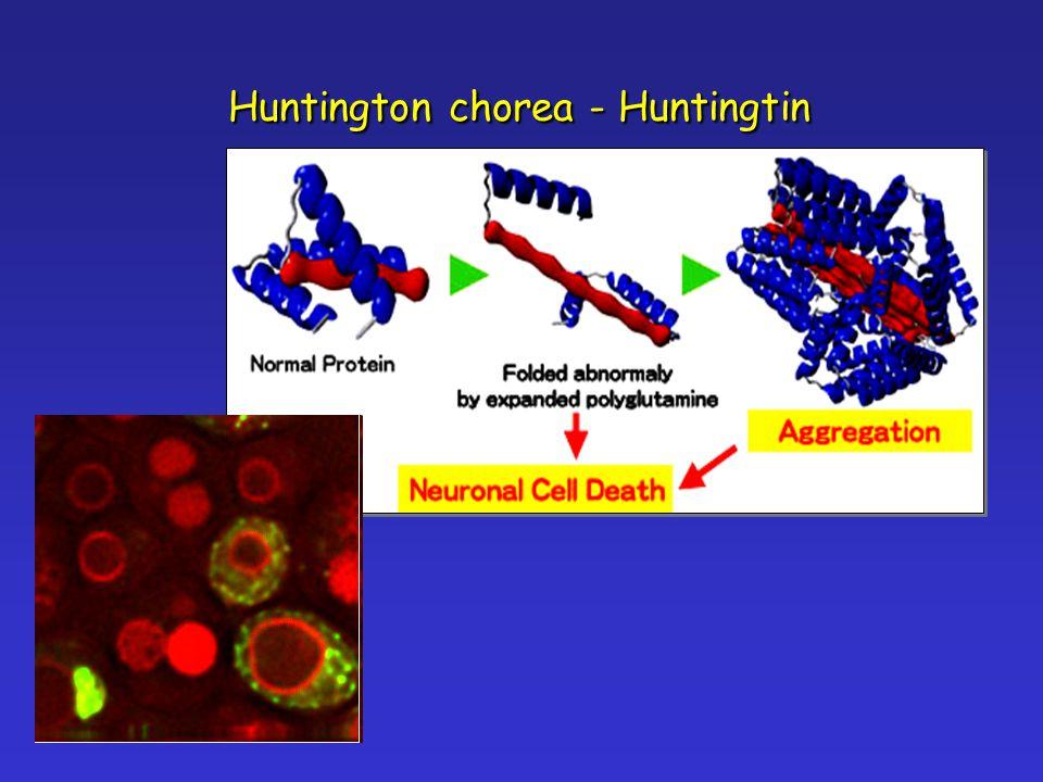 Huntington chorea - Huntingtin