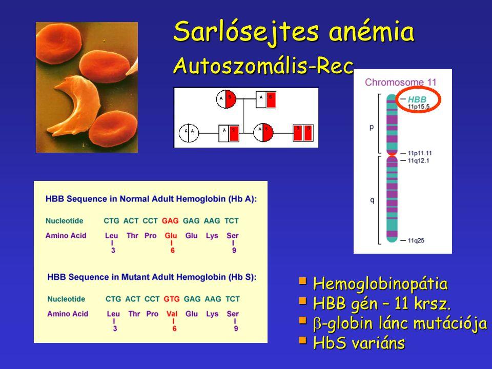 Sarlósejtes anémia Autoszomális-Rec.. Hemoglobinopátia