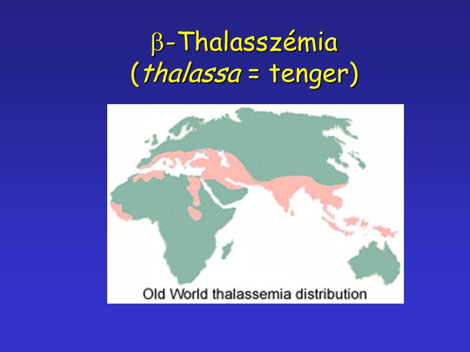 b-Thalasszémia (thalassa = tenger)