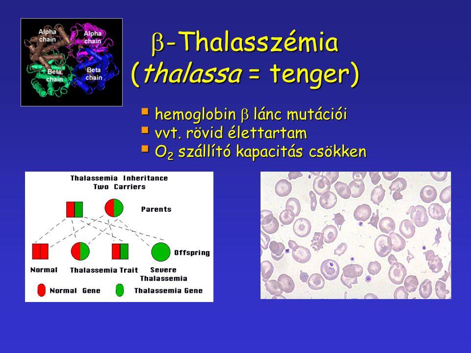 b-Thalasszémia (thalassa = tenger) hemoglobin b lánc mutációi