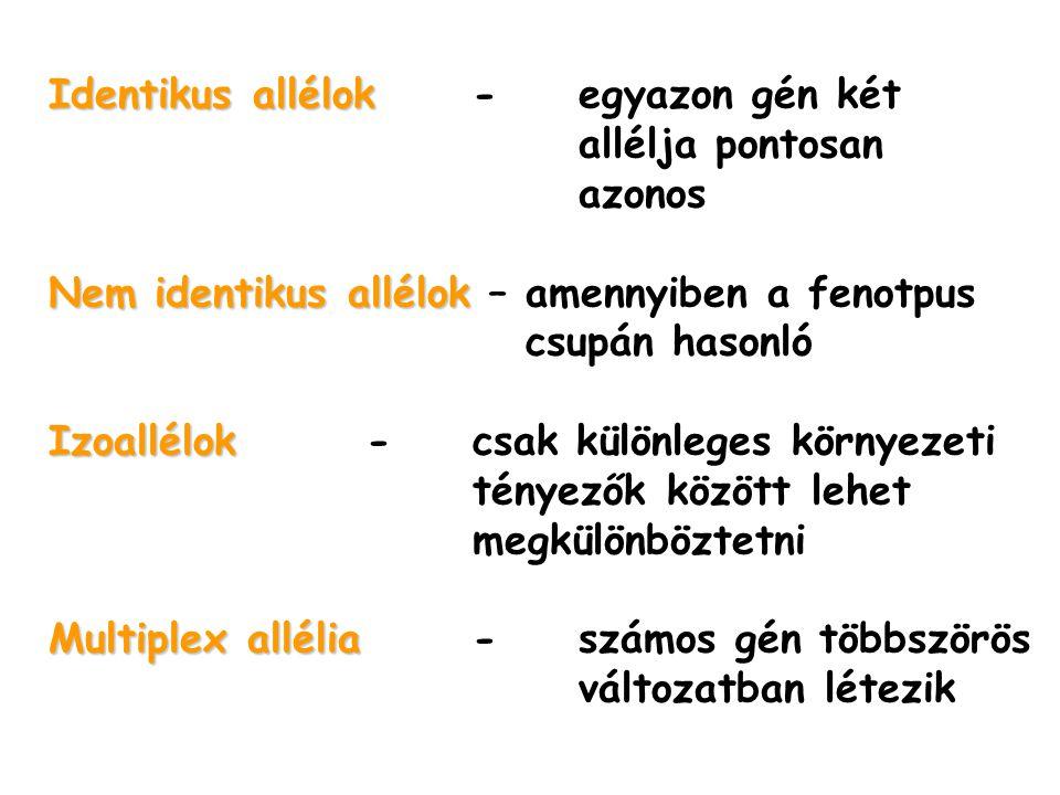Identikus allélok - egyazon gén két