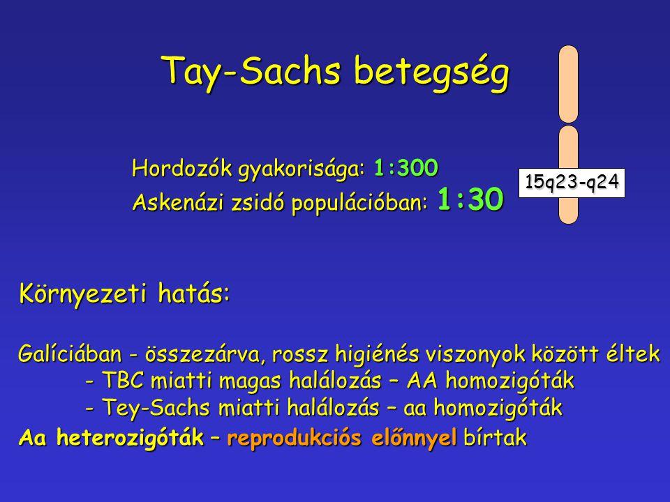 Tay-Sachs betegség Környezeti hatás: Hordozók gyakorisága: 1:300