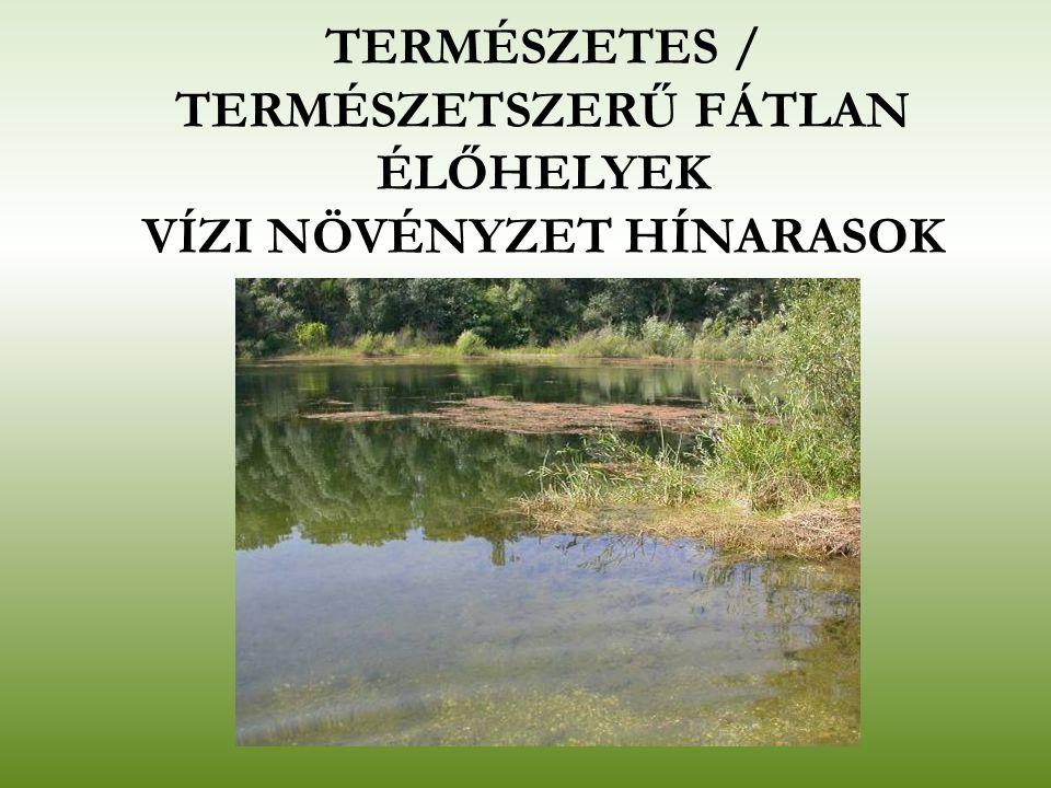 TERMÉSZETES / TERMÉSZETSZERŰ FÁTLAN ÉLŐHELYEK VÍZI NÖVÉNYZET HÍNARASOK