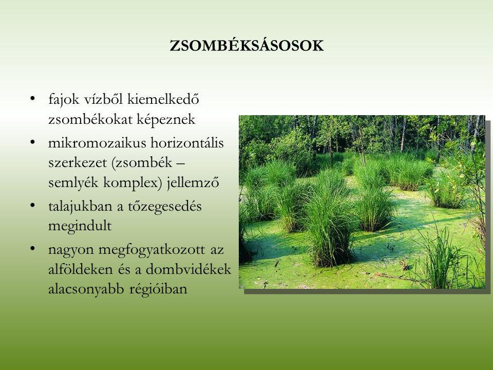 ZSOMBÉKSÁSOSOK fajok vízből kiemelkedő zsombékokat képeznek. mikromozaikus horizontális szerkezet (zsombék – semlyék komplex) jellemző.