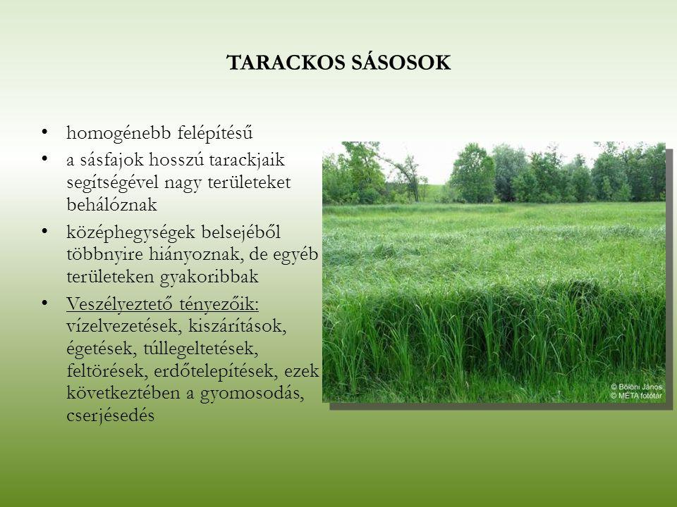 TARACKOS SÁSOSOK homogénebb felépítésű