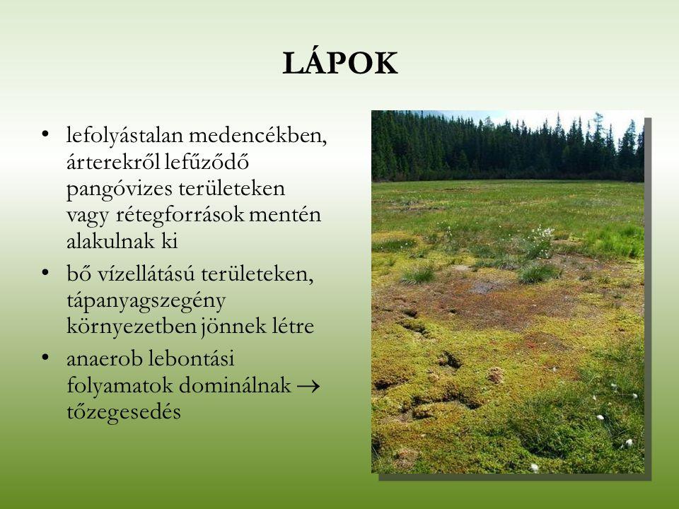 LÁPOK lefolyástalan medencékben, árterekről lefűződő pangóvizes területeken vagy rétegforrások mentén alakulnak ki.