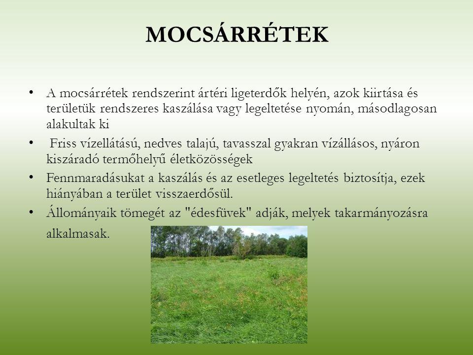 MOCSÁRRÉTEK